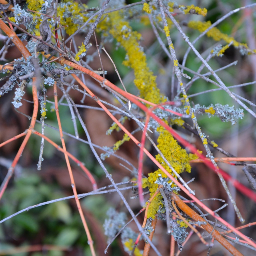 Lovely lichen