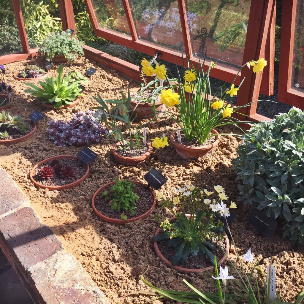 In the alpine house