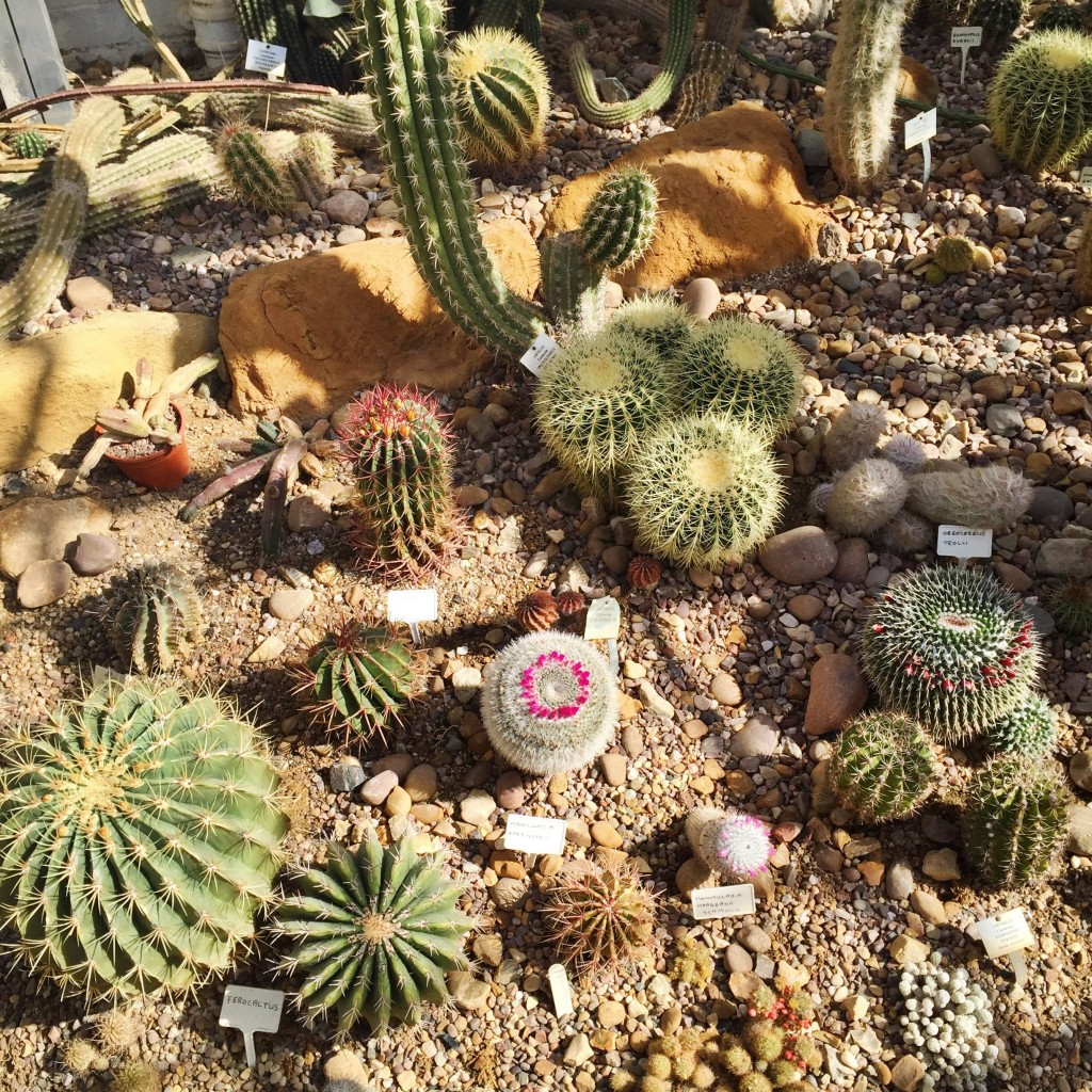 An amazing cacti selection