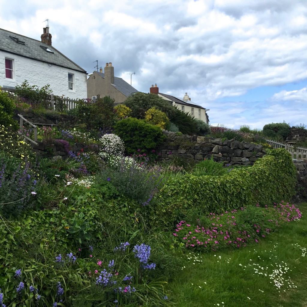 Craster harbour gardens