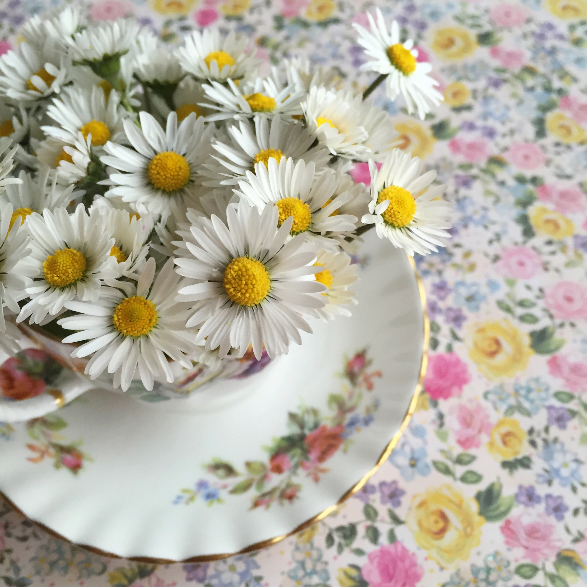 Daisies in a tea cup | Hello! Hooray!