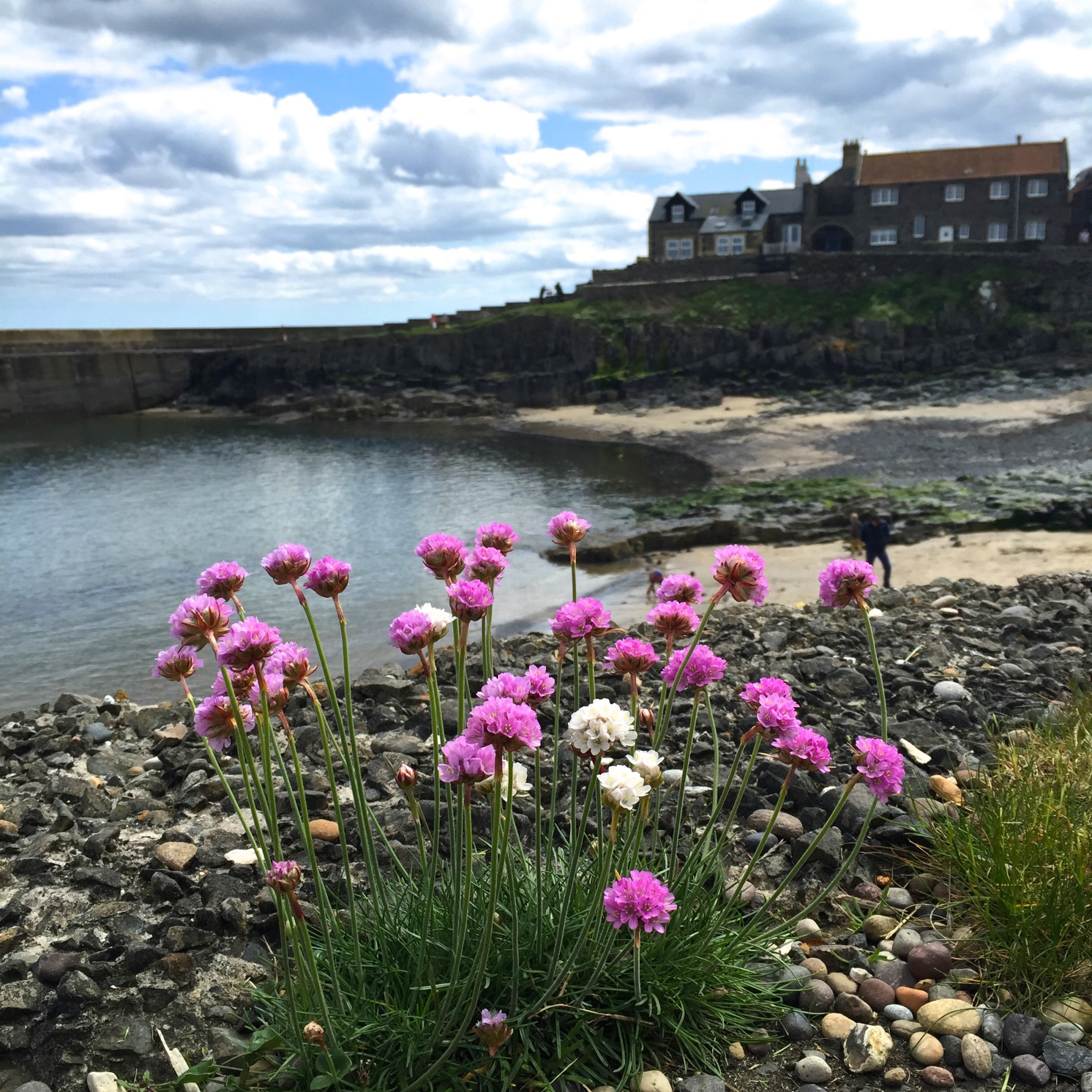 Craster Harbour | Hello! Hooray!