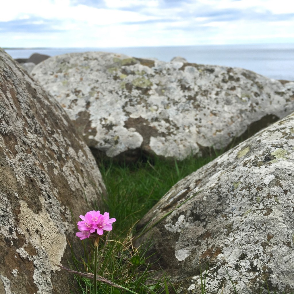 Flower amongst the rocks