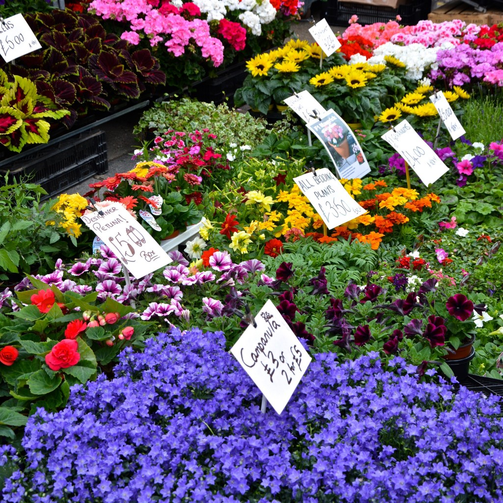 Bedding plants at Columbia Road