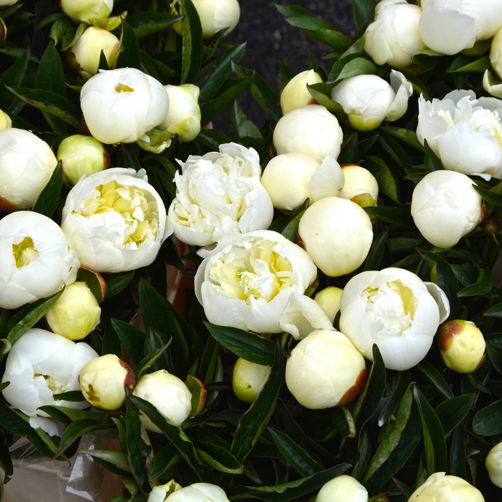 White peonies | Hello! Hooray!