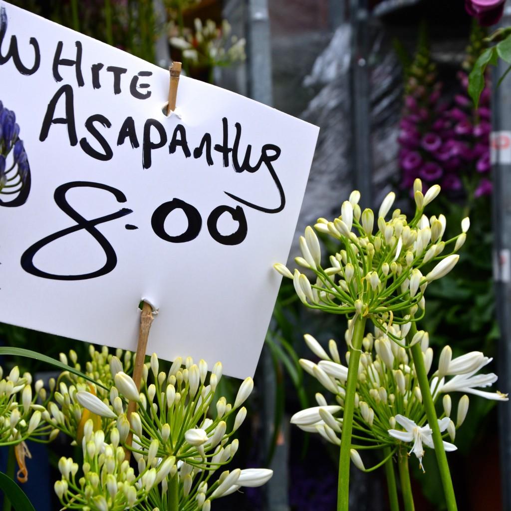 Asapanthus| Hello! Hooray!