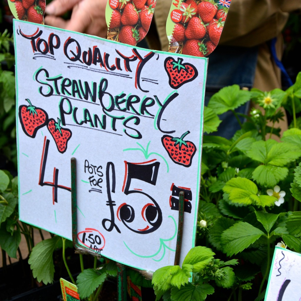Strawberries and lovely signage| Hello! Hooray!