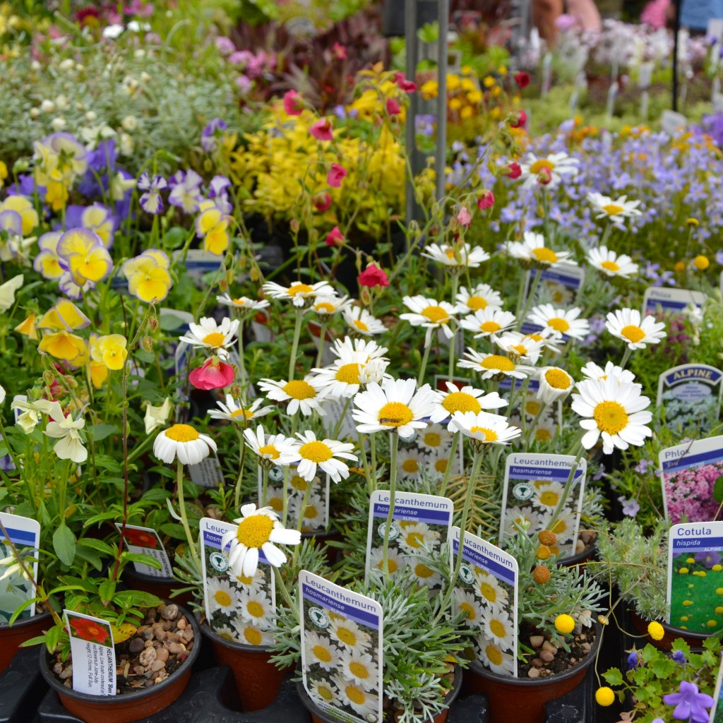 Alpine flowers| Hello! Hooray!