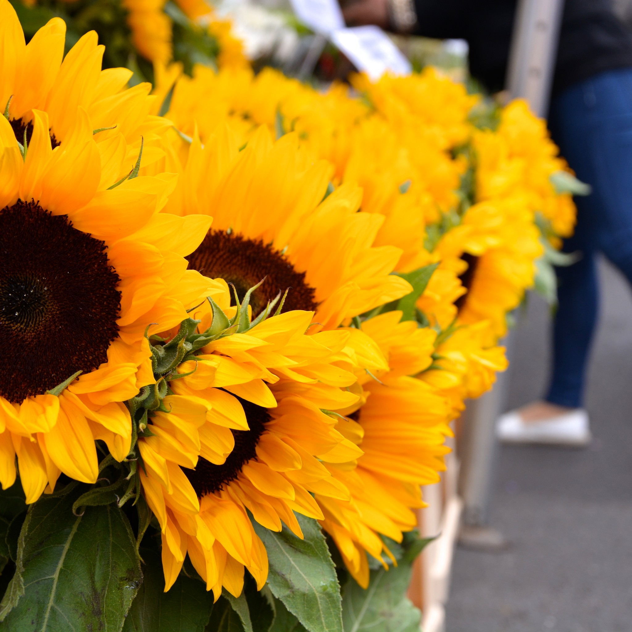 Sunflowers at Columbia Road