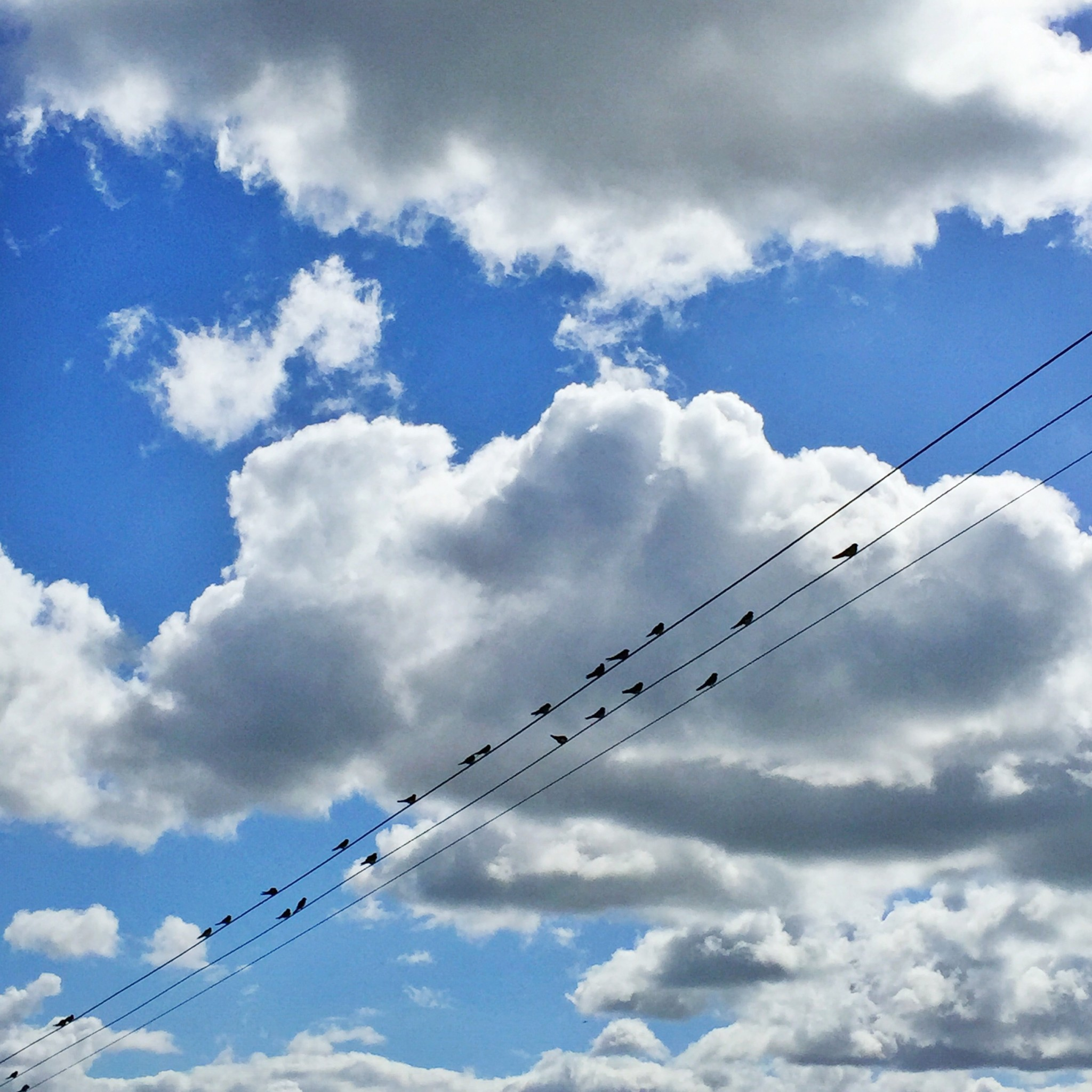 Birds on a wire | Hello! Hooray!