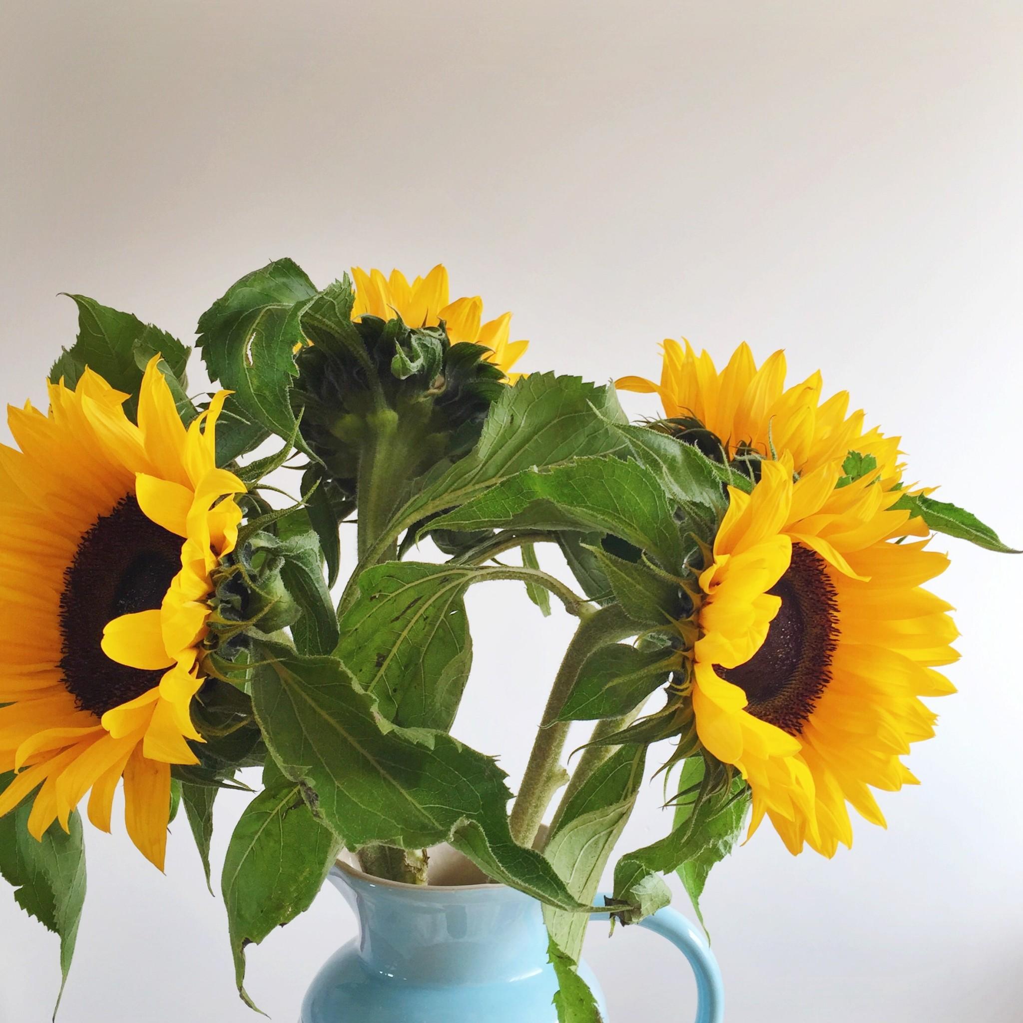 Sunflowers | Hello! Hooray!