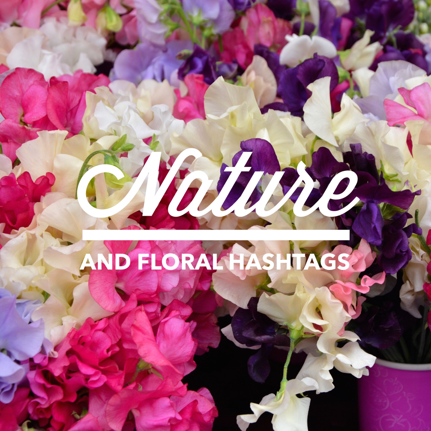 Nature hashtags | Hello! Hooray!