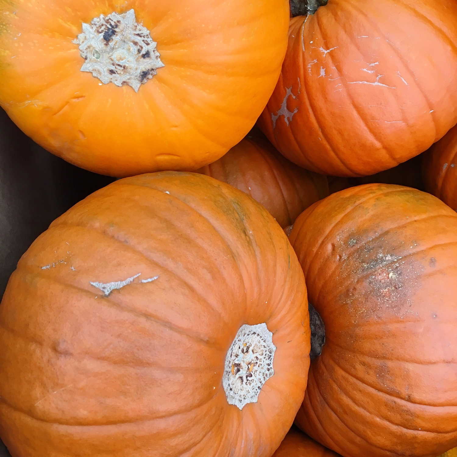 Perfect pumpkin recipes for autumn | Hello! Hooray!