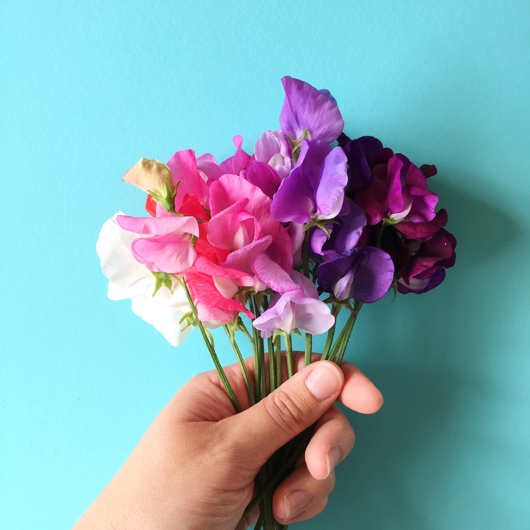 Bunch of sweet peas in colour order | Hello! Hooray!
