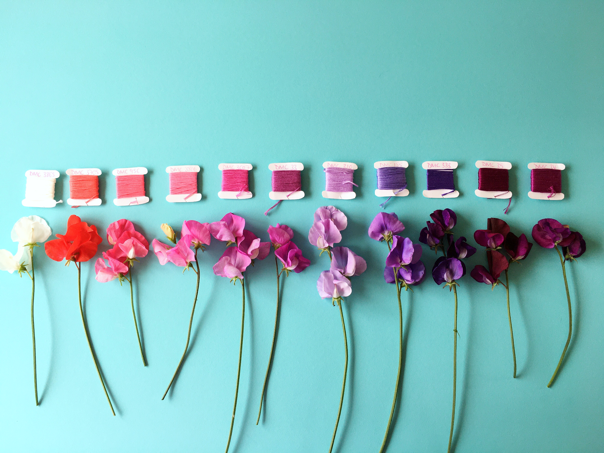 Crafty Colour Palette #5 Sweet Peas in full | Hello! Hooray!
